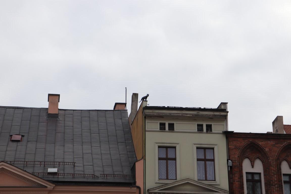 Toruń z dzieckiem - atrakcje dla dzieci Toruń - Rynek Staromiejski - Rodzinny Kompas 5