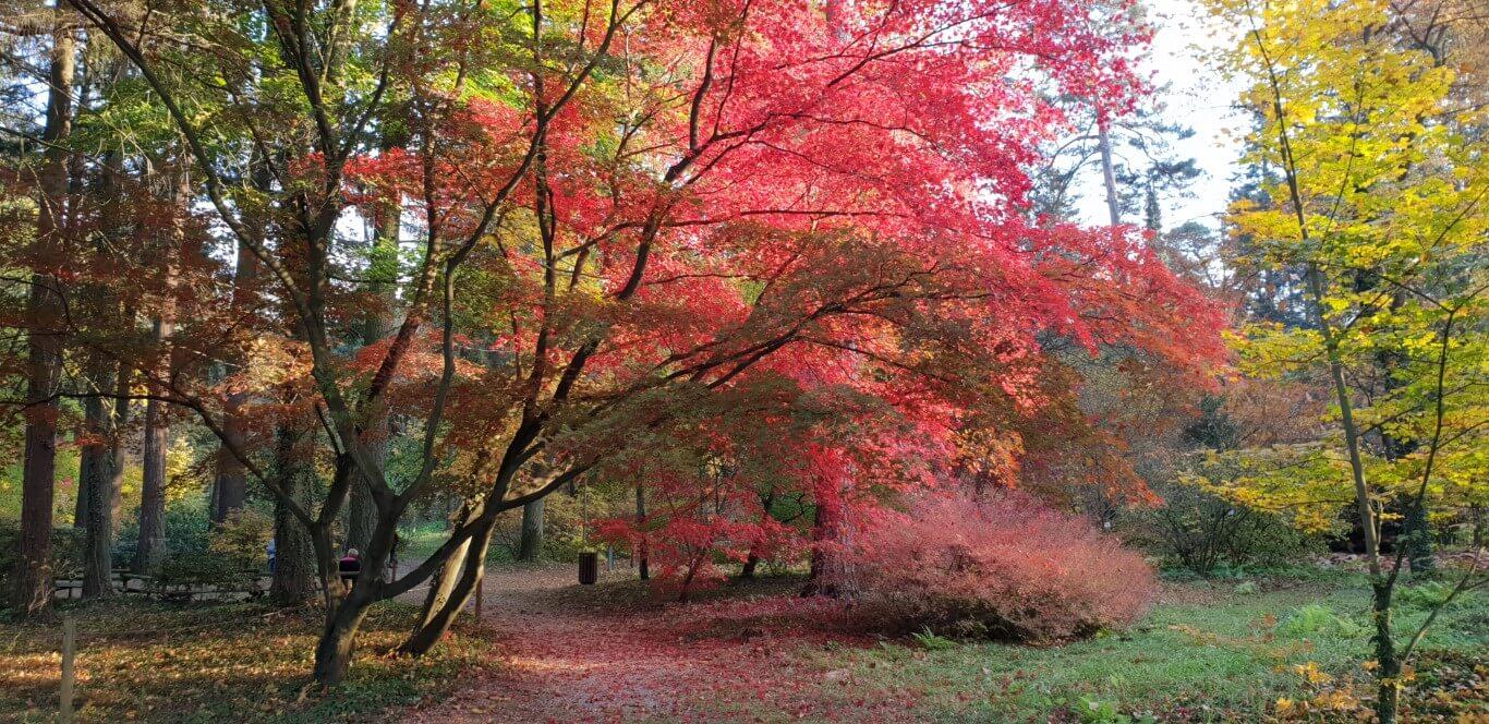 Arboretum w Rogowie - atrakcje dla dzieci okolice Warszawy - Rodzinny Kompas 13