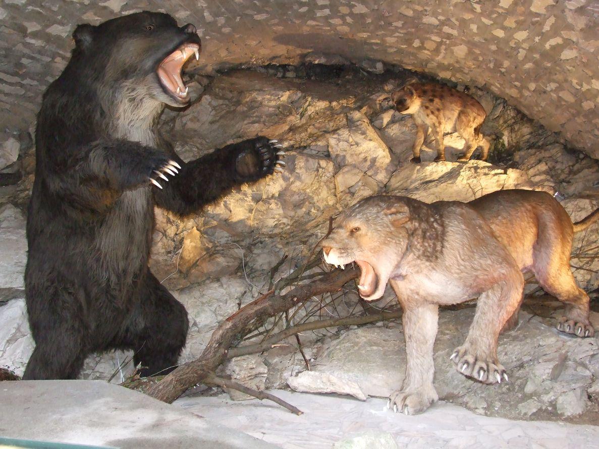 Jaskinia Niedźwiedzia - atrakcje dla dzieci Sudety - Rodzinny Kompas