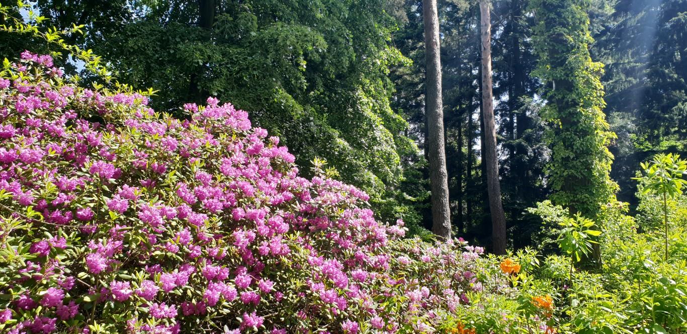 Arboretum w Rogowie - atrakcje dla dzieci okolice Łodzi - Rodzinny Kompas 1