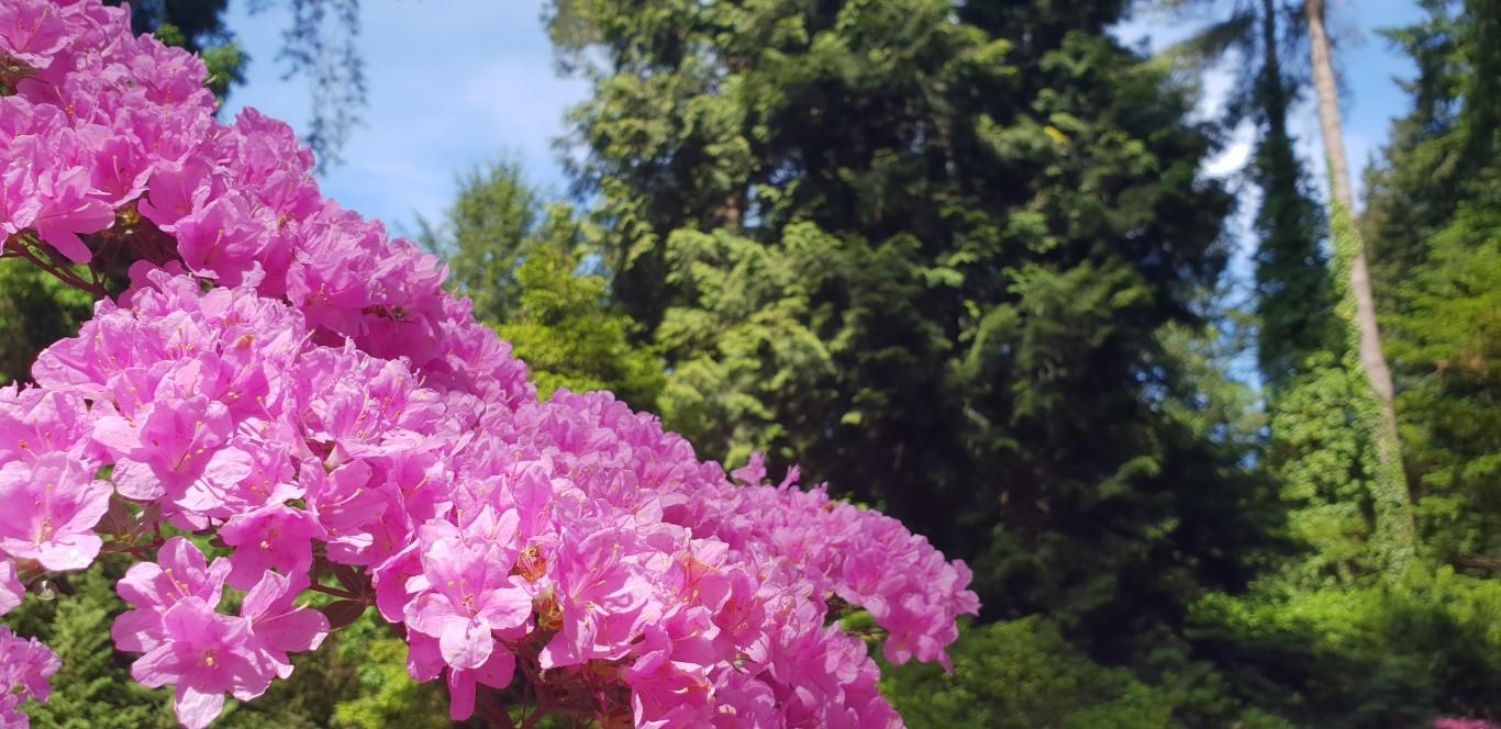 Arboretum w Rogowie - atrakcje dla dzieci okolice Łodzi - Rodzinny Kompas 9