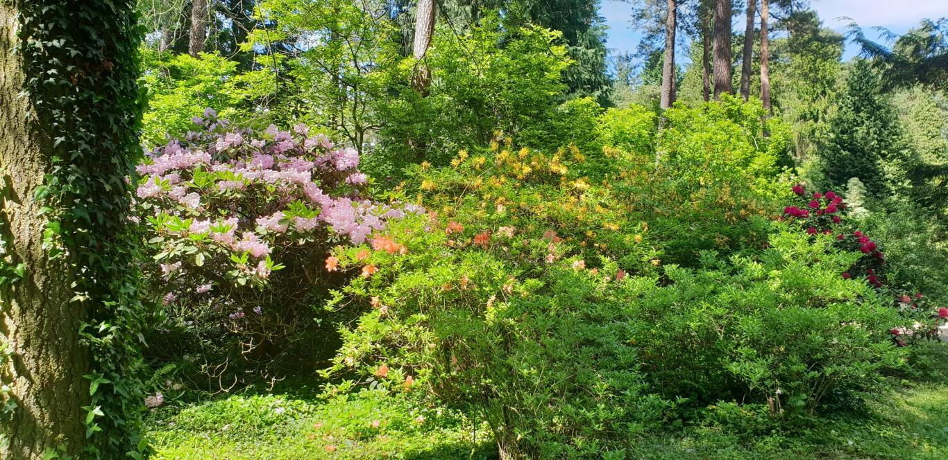 Arboretum w Rogowie - atrakcje dla dzieci okolice Łodzi - Rodzinny Kompas 7