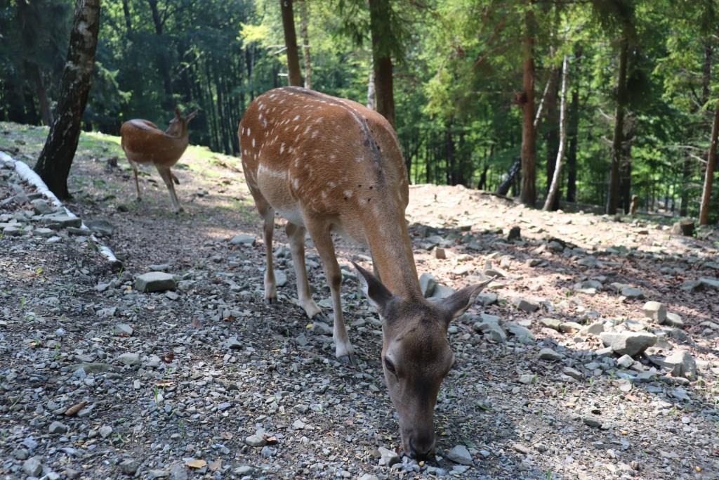 Leśny-Park-Niespodzianek-atrakcje-dla-dzieci-ustronie-beskidy-Rodzinny-Kompas-4