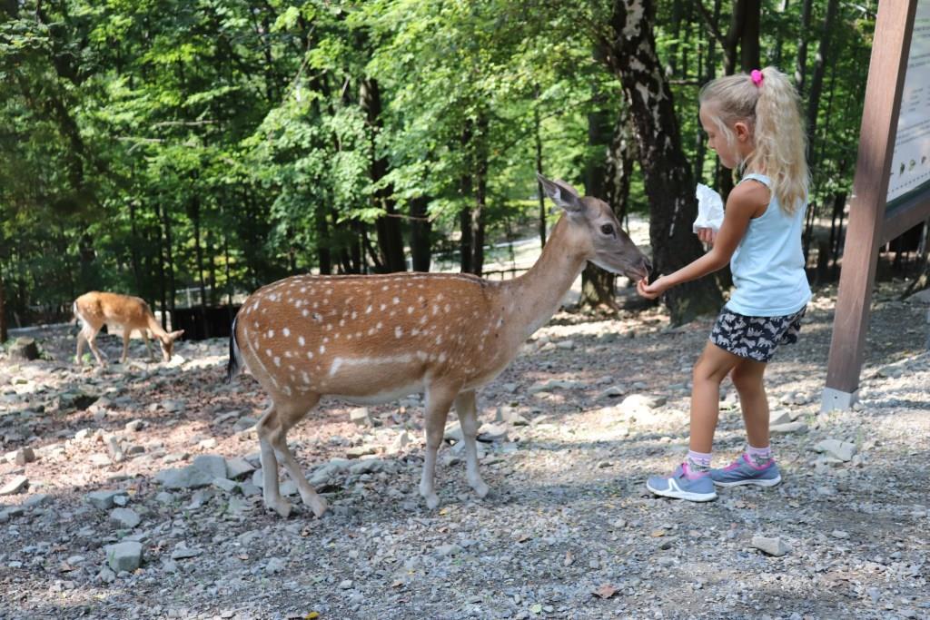 Leśny-Park-Niespodzianek-atrakcje-dla-dzieci-ustronie-beskidy-Rodzinny-Kompas-1