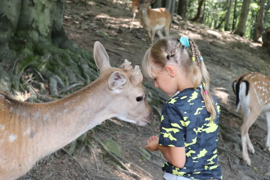 Leśny-Park-Niespodzianek-atrakcje-dla-dzieci-ustronie-beskidy-Rodzinny-Kompas-9