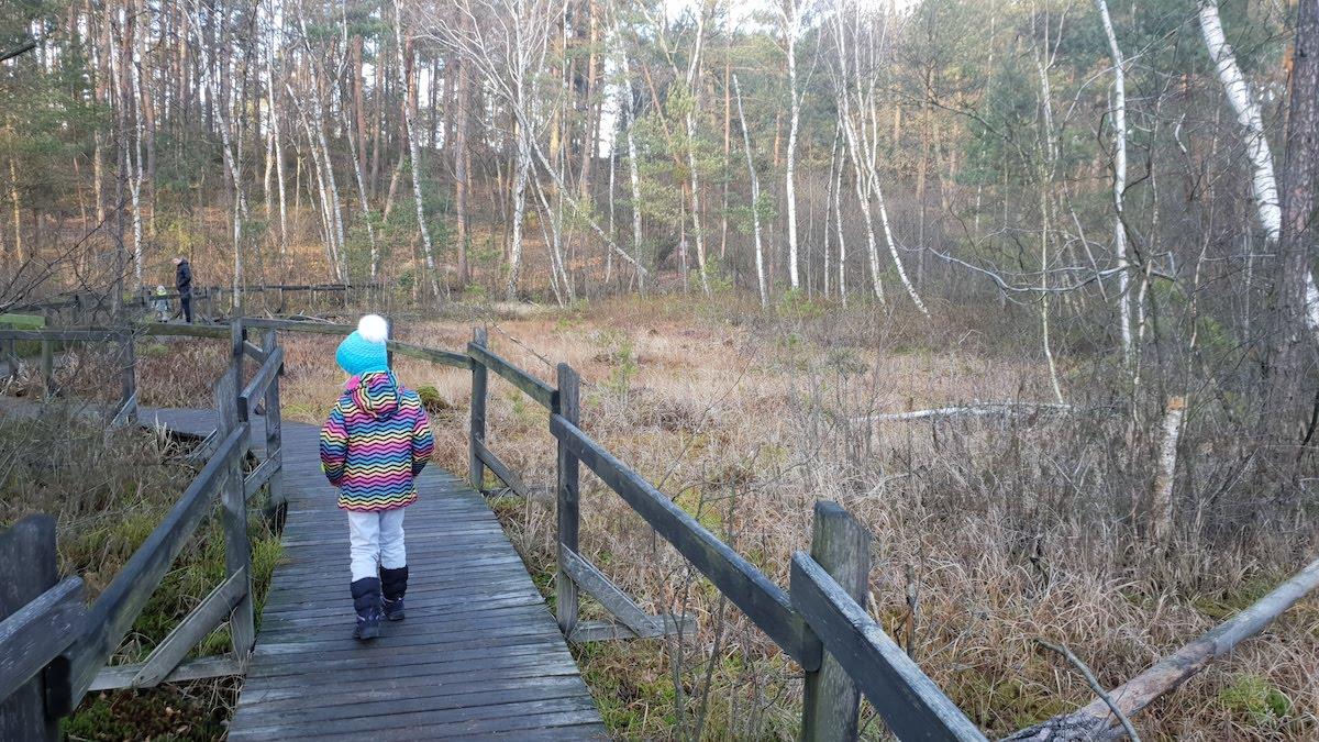 Goździkowe Bagno - miejsce na rodzinny spacer - pomysł na weekend - Rodzinny Kompas 3