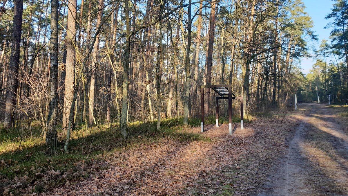 Goździkowe Bagno - miejsce na rodzinny spacer - pomysł na weekend - Rodzinny Kompas 11