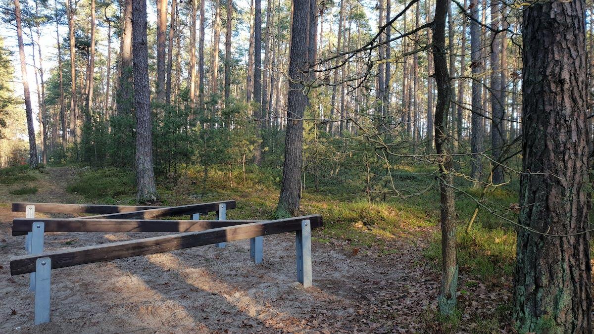 Goździkowe Bagno - miejsce na rodzinny spacer - pomysł na weekend - Rodzinny Kompas 12