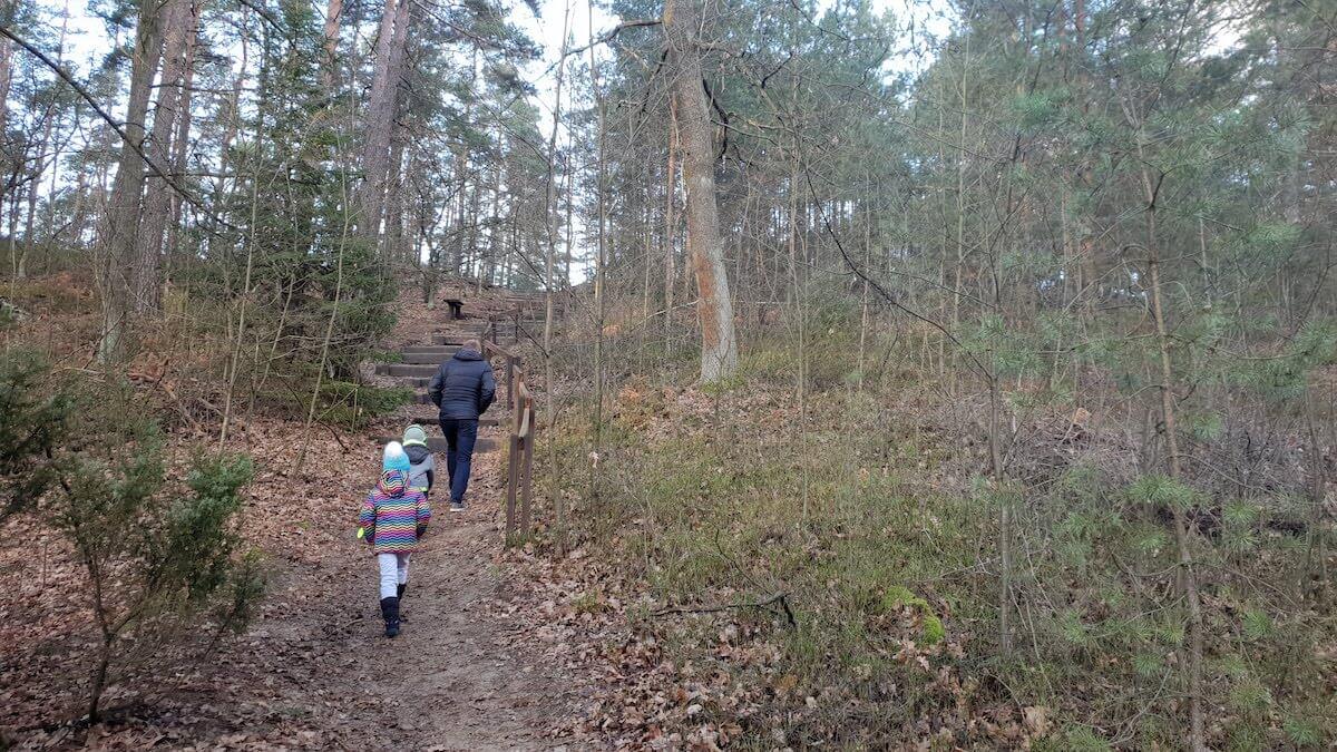 Goździkowe Bagno - miejsce na rodzinny spacer - pomysł na weekend - Rodzinny Kompas 9